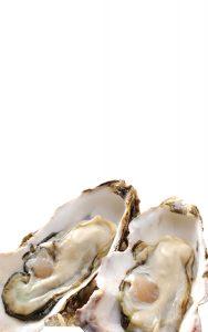 真鶴漁師の岩牡蠣養殖の挑戦 真鶴岩カキ養殖プロジェクト